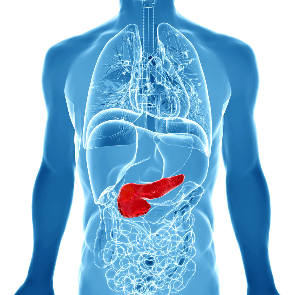 pancreas-structure