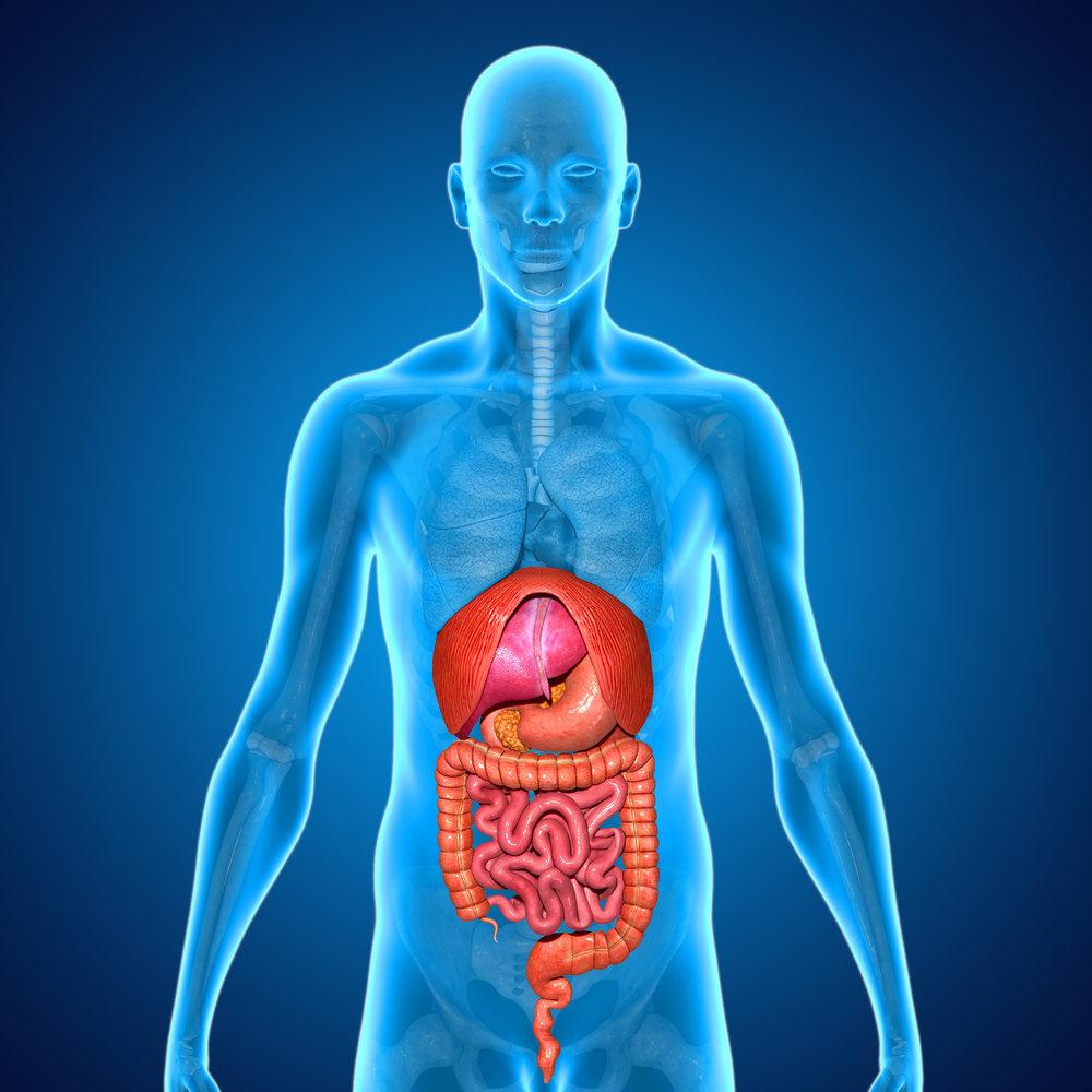 abdomen - Click Here