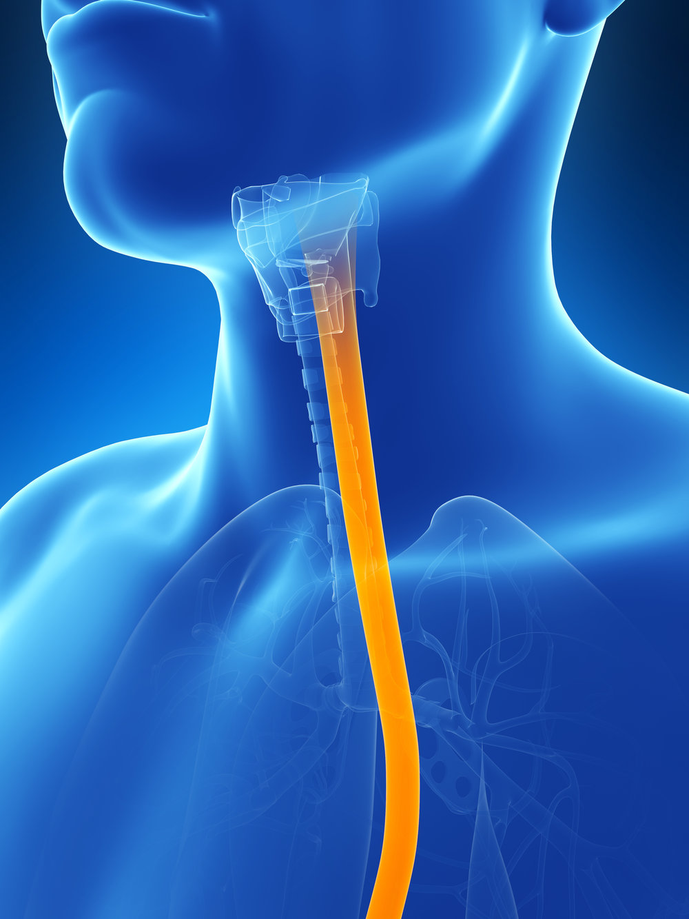 Esophagus & Endoscopy - Click Here