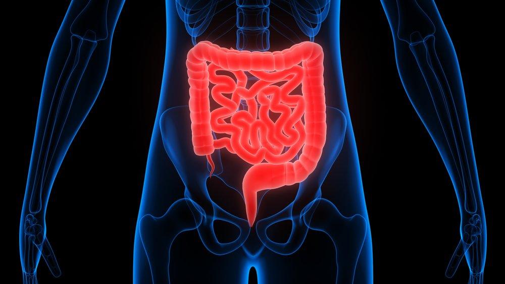 Intestinal -