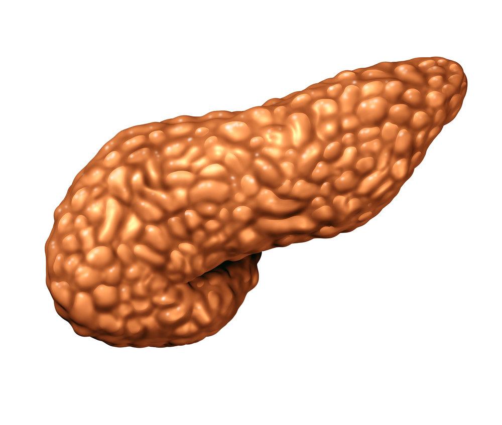 Pancreas -