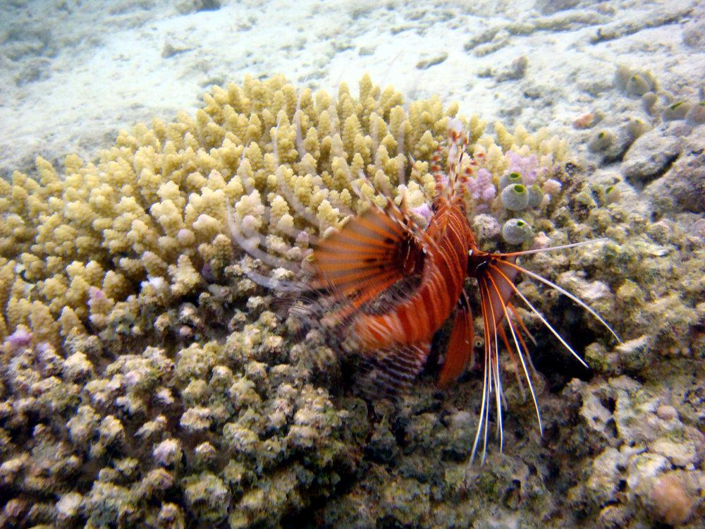 Photos taken by the artist, Indian Ocean