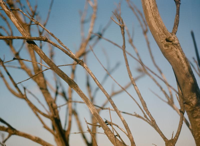 Noosa Photography Film Photography Bronica ETRS, Zenza 75mm F2.8 lens, Kpdak Portra 400