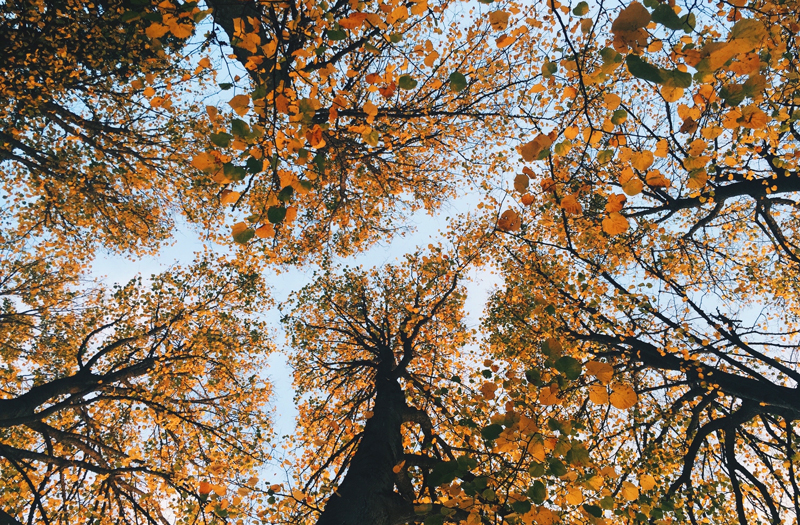 ROBERT'S TREE SERVICE - Nickajack recommends Roberts Tree Service for tree removal, pruning and trimming, storm damage and stump removal.