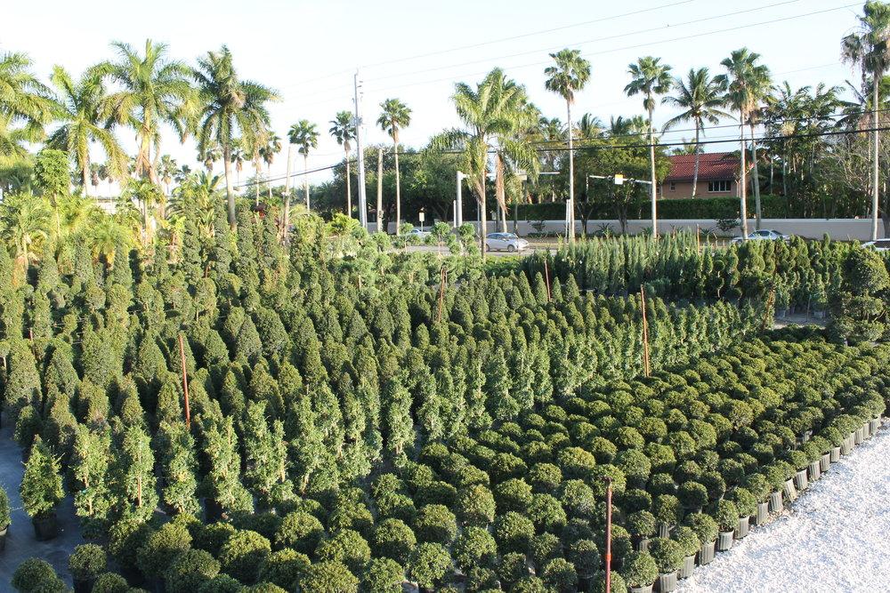 topiary (1).JPG