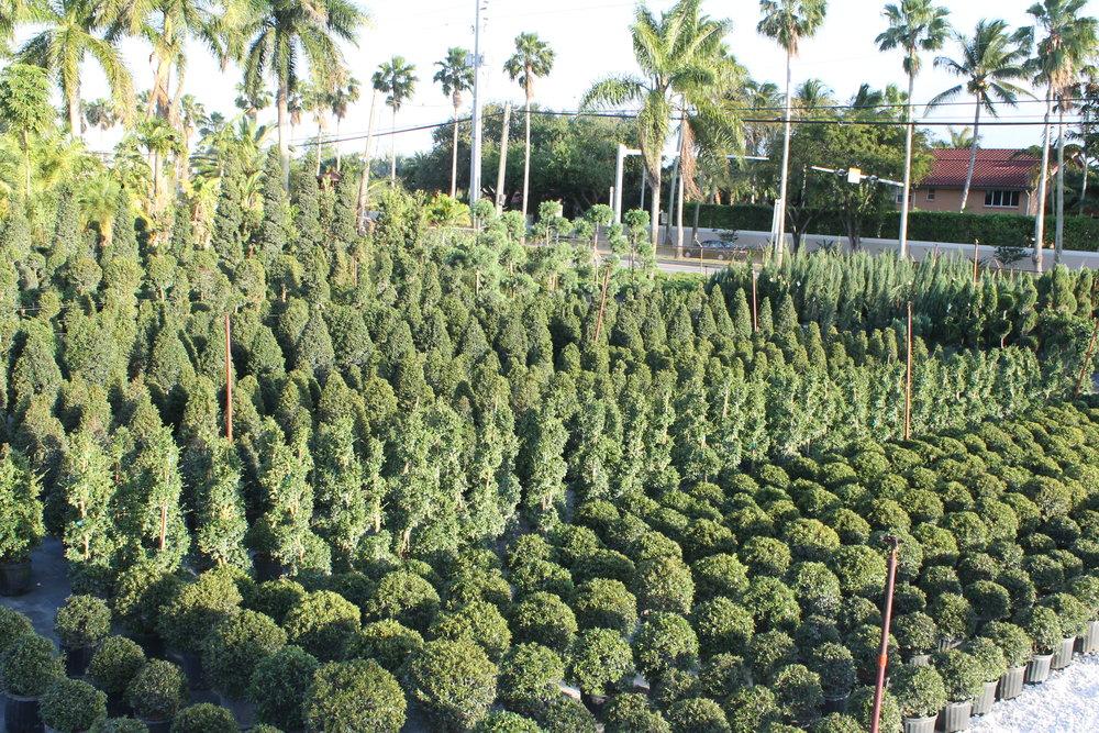 topiary (5).JPG