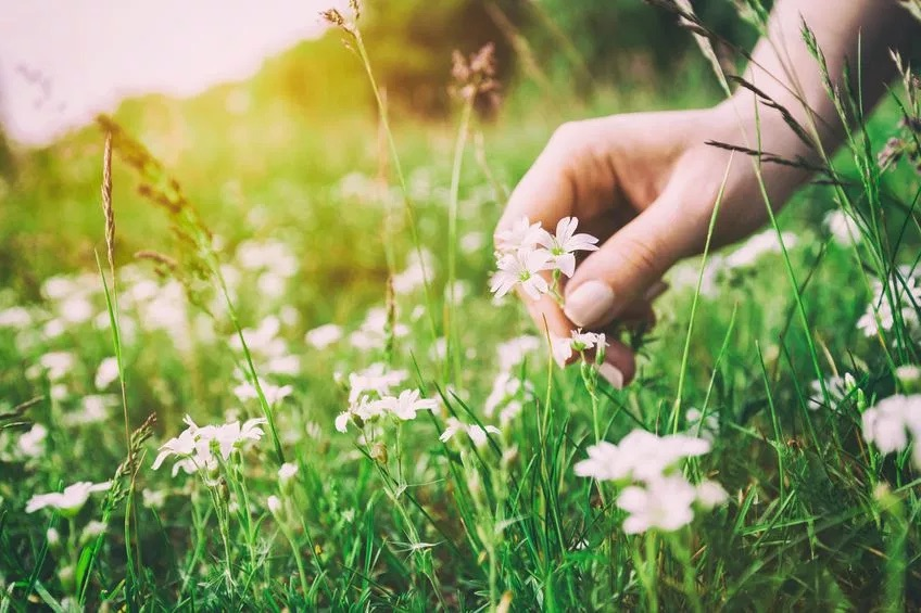 Herbs for the Emotions - Thursday Aug 16 | 7-8:30 PM