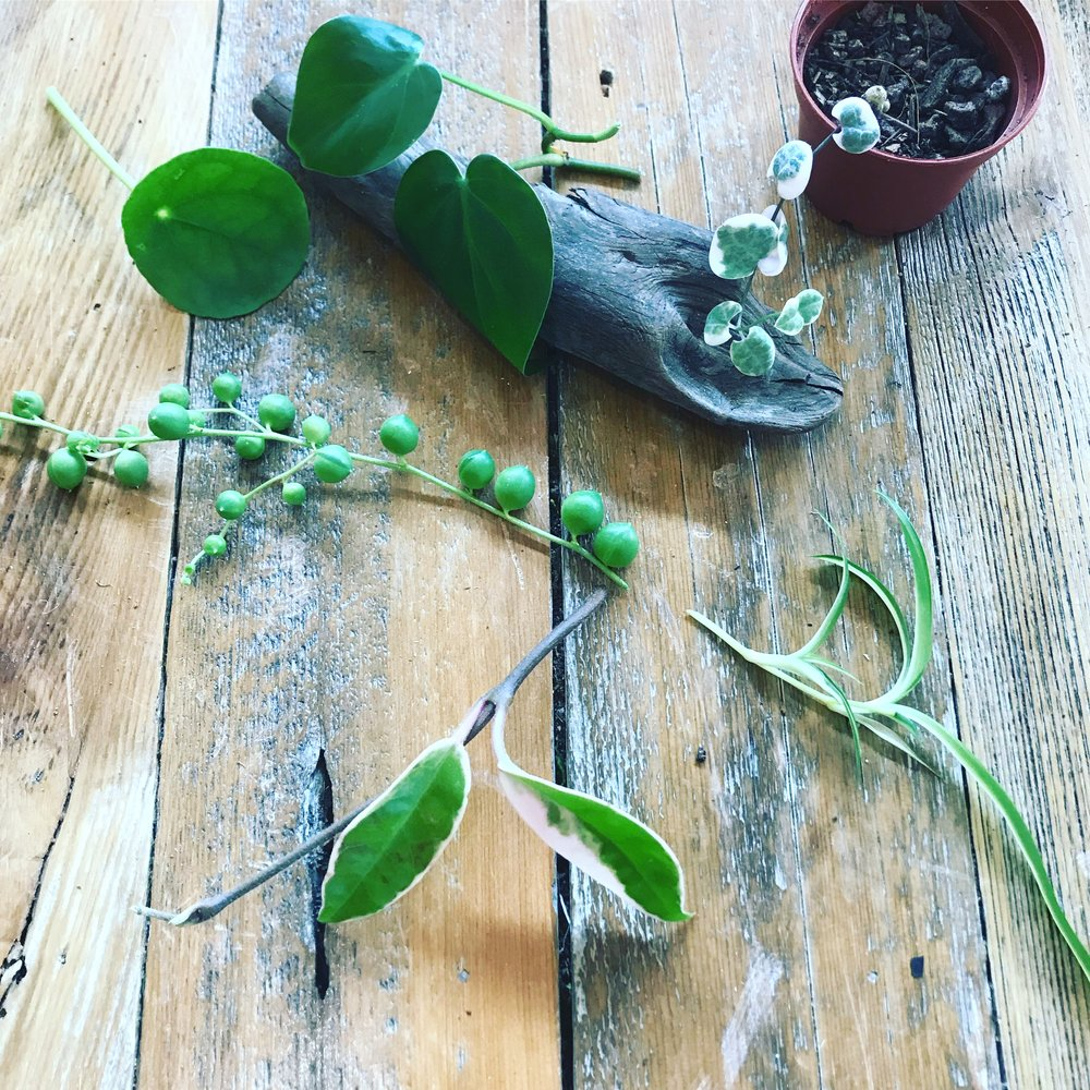 Plant Share and Cuttings Swap - Sunday Aug 26 | 4-5 PM