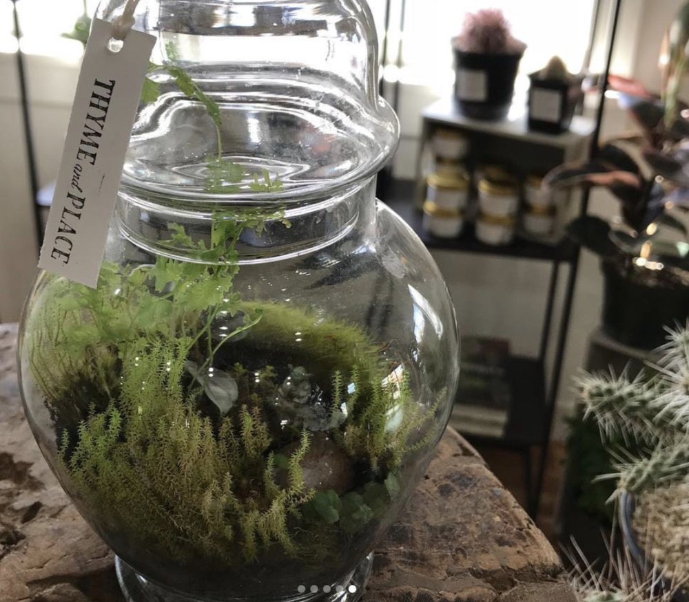 Terrarium Making Apr 24 Thyme And Place