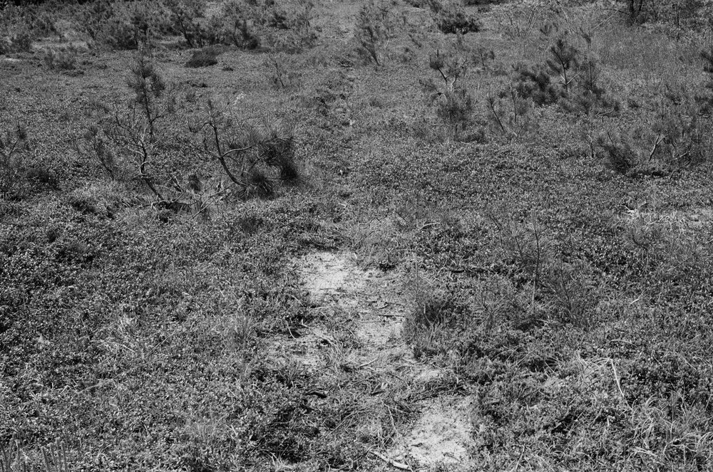 Path,  2014  digital image  35mm