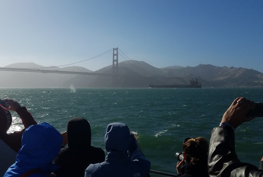 The whale's back is out of the water; the wind is quickly blowing the spout across the surface of the water. A large fuel ship passes under the bridge in the background.