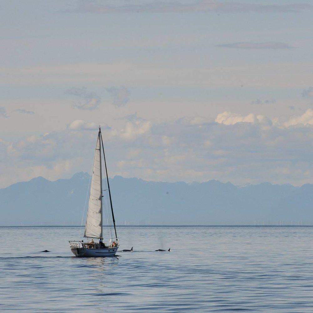 Lucky sailboat!
