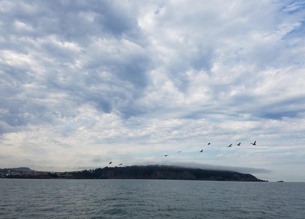 Pelicans soaring over the Golden Gate Strait.