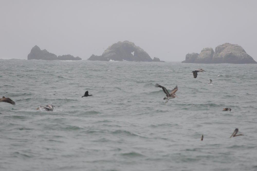 Bird activity near Land's End.