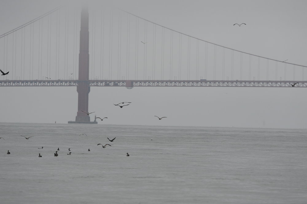 Bird activity near the Golden Gate Bridge.