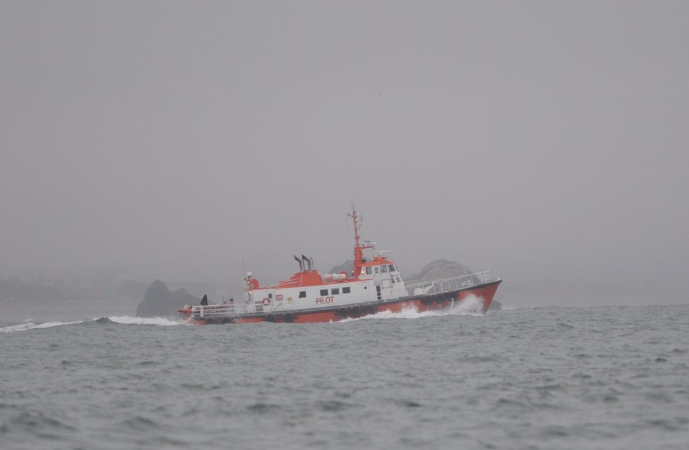 The pilot boat who reported the whales to us.