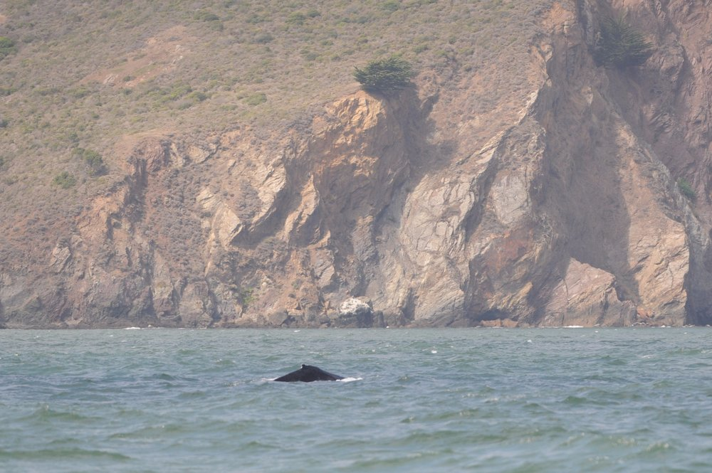 Humpback on the north side of the strait.