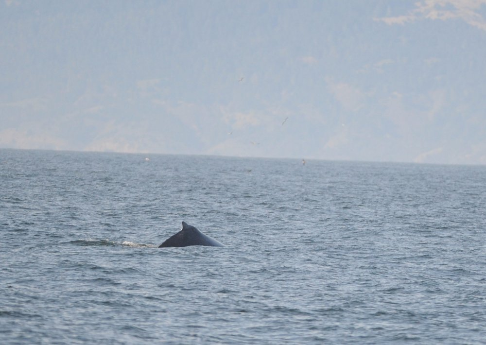 Almost a fluke dive, but not quite!
