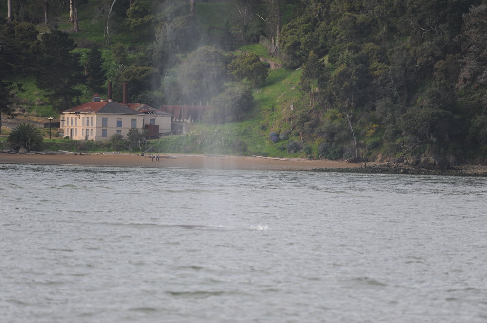 A spout in front of Angel Island.