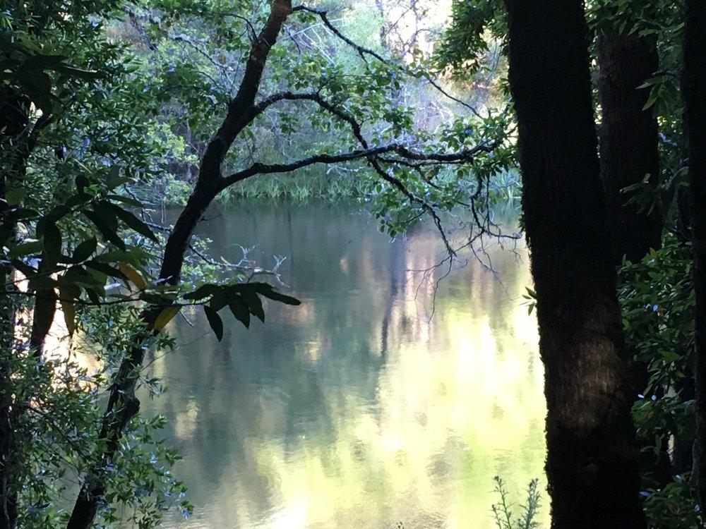 The Pond.Photo by Dayamudra Ann Dennehy