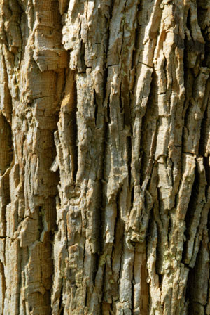 walpole-treetop-1.jpg