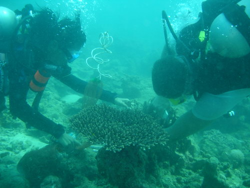 on (left), female etc graduate and dive instructor, cleans up thai muang marine national park.jpg