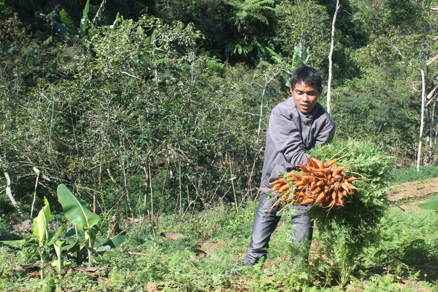 Harvesting carrots by a local NGO. Previously, hotels and restaurants imported all their produce from neighbouring islands. Photo courtesy of Tarsis Hurmali.