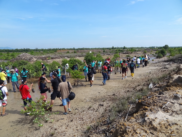 Rainforest World Music Festival has made tree planting an annual affair. In 2016, musicians and media helped restore degraded land at the riverbank of Kuching Wetland National Park by planting 300 mangrove saplings.