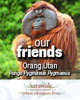SarawakTourism-Orangutan+WebAds-1-160x200px-.jpg