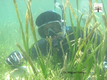 Dr. Miguel Fortes: Seagrass species in the Philippines are threatened, need conservation, preservation and production intensification.
