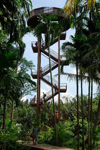 Jejawi Tower gets you up 21 m high with panaromic view of Ubin. Source: National Parks Board.