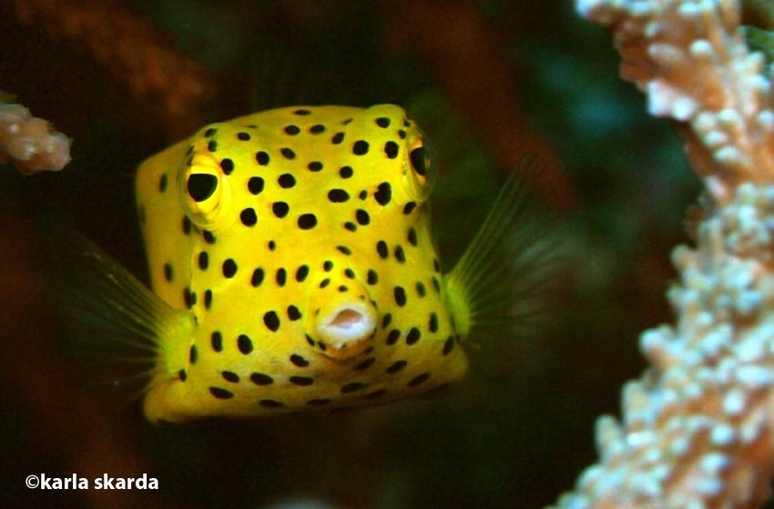 Box fish pouts!