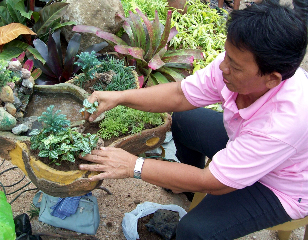 Local creating a dish garden