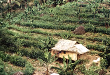 Here's an example of a CAT system where banana trees are grown between rows of trees planted along the contour of sloping lands.