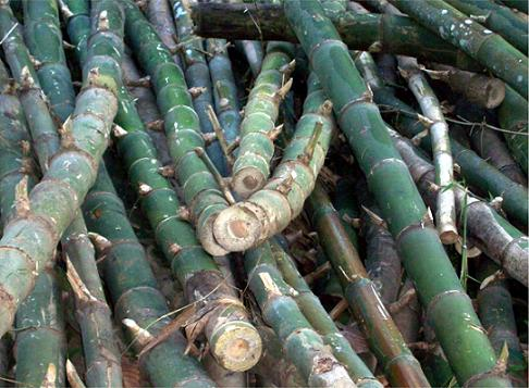 Versatile bamboo poles.