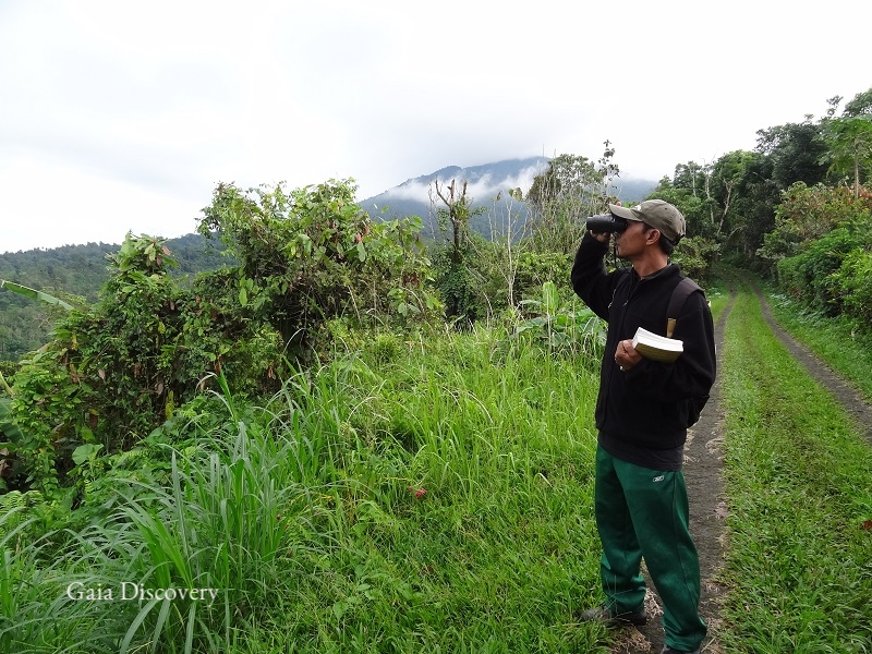 Skilled in spotting birds, Wayan takes a break from farming to take guests birdwatching in Batukaru Nature Reserve.