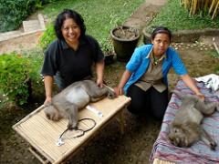 Rehabilitating monkeys for better health