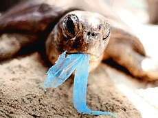 Bin your trash or take back your rubbish so as not to harm wildlife