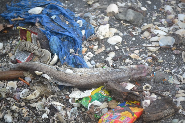 WWF: 200 marine species die from ingesting plastic bags and choking from them