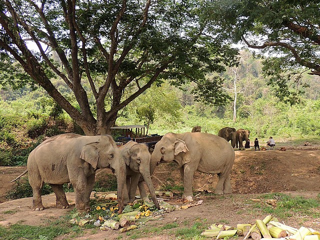 Rescued elephants learn new socialising skills at BLES. Courtesy BLES.