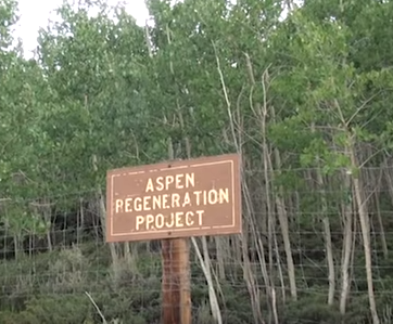 Fenced in regeneration areas are seeing some success in helping new growth for the pando. Courtesy Forest Parks.