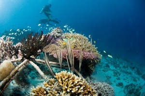 Biorock gives coral reefs a chance to bounce back. Thomas Goreau will be explaining how at 2018 Global Eco Asia-Pacific Conference. Courtesy GCRA