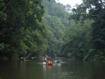 Lush greenery alongside river banks offers a rejuvenating experience for kayakers. Photo credit: Semadang Kayak