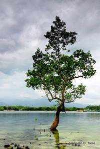 Deforestation of mangroves is causing severe problems to the environment.