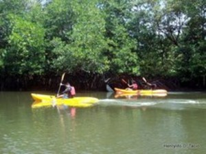 Tourism also brings in money and jobs in mangrove forests.
