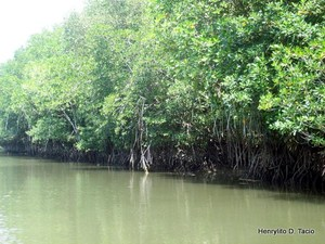 In The Philippines alone, nearly three quarters of the mangrove forests are gone.