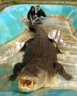 Pangil, a 5.4m saltwater crocodile, like the late Lolong, is held captive in unnatural and inadequate setting at the Davao Crocodile Park.