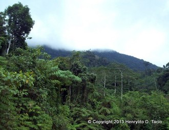 gaiadiscovery-PhilippinesDeforestationThreatsandReforestationIssues-2-2215646-23523503-thumbnail.jpg