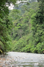 gaiadiscovery-Jungle in Crisis-IndonesiansActtoStopDeforestation-1-2215646-20207050-thumbnail.jpg