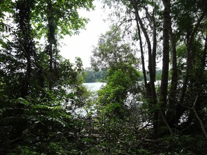 Pulau Ketam has beach forest habitat as well, which is worth studying and documenting.